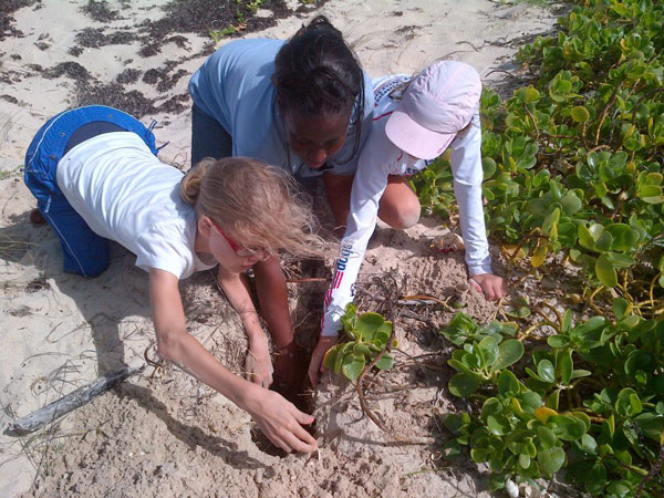 sxmnaturefoundationrecordinglbseaturtlehatching02082012