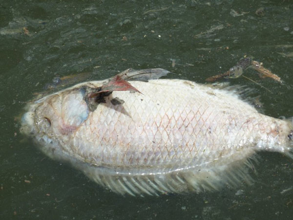 deadfish24052010