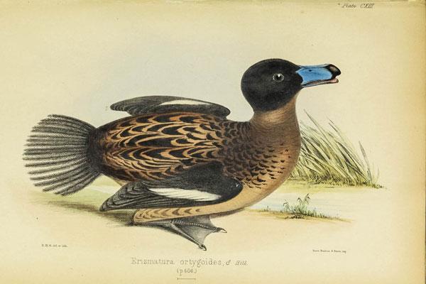 duck08022016