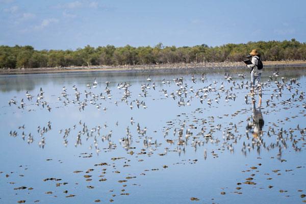 wetlandsbirds13032016
