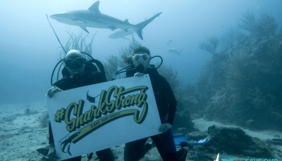 St  Martin News Network - SXM Shark Foundation launched with